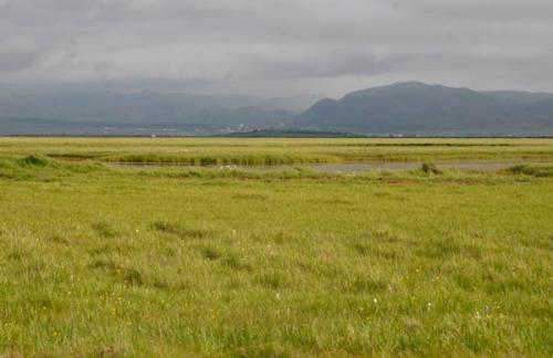 Friðland fugla í Flóa